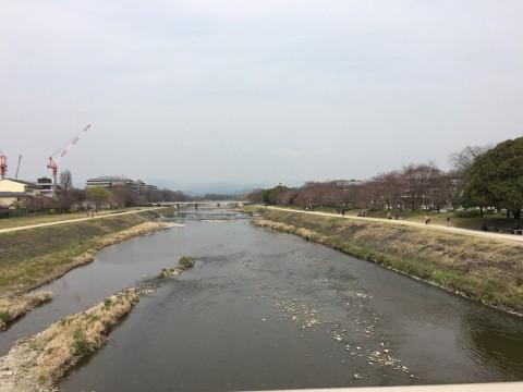 201604鴨川桜咲きかけ